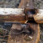 Żar z pyłu węgla drzewnego