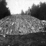 Stos na węgiel drzewny